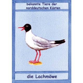 w28005-postkarte-a6-kuestentiere,-lachmoewe
