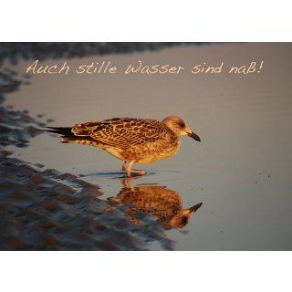 w28603-foto-postkarte-a6-moewen
