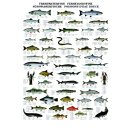 w33041-wandtafel-suesswasserfische-70x100cm