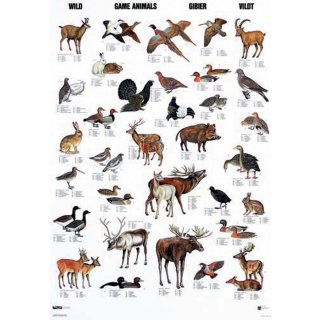 w33052-wandtafel-wildtiere