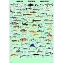 w33058-wandtafel-angelfische-70x100cm