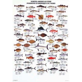 w33059-wandtafel-nordamerikafische