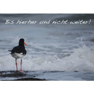 w28645-foto-postkarte-a6-austernfischer