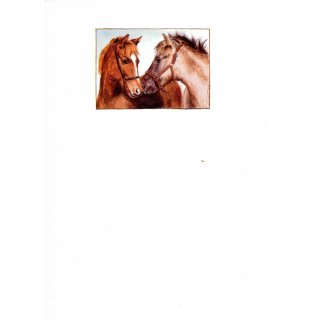 w926059-briefpapier-a4-25 blatt-pferdegefluester