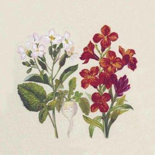 w75594-servietten-botanisch-33x33cm-packung-mit-20-stueck