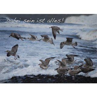 w28610-foto-postkarte-a6-moewen